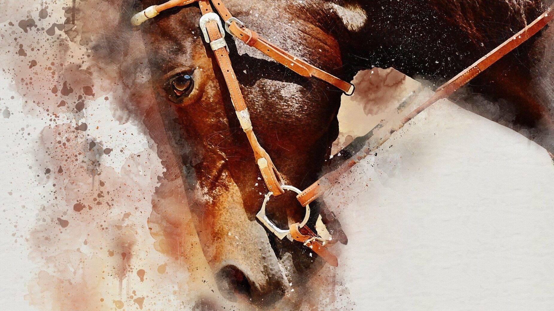 Toerisme Ariège Sport Paardrijden Illustratie Paard