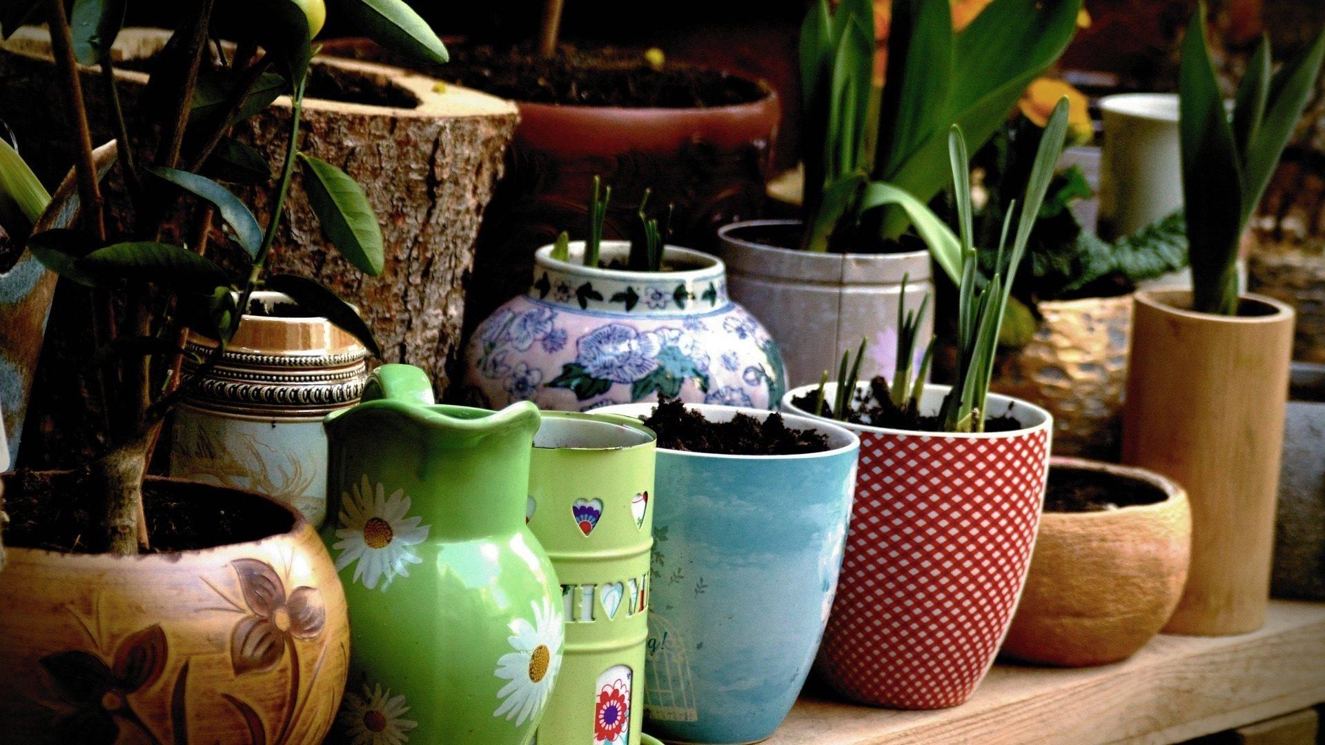 Markten Brocantes Festiviteiten Planten