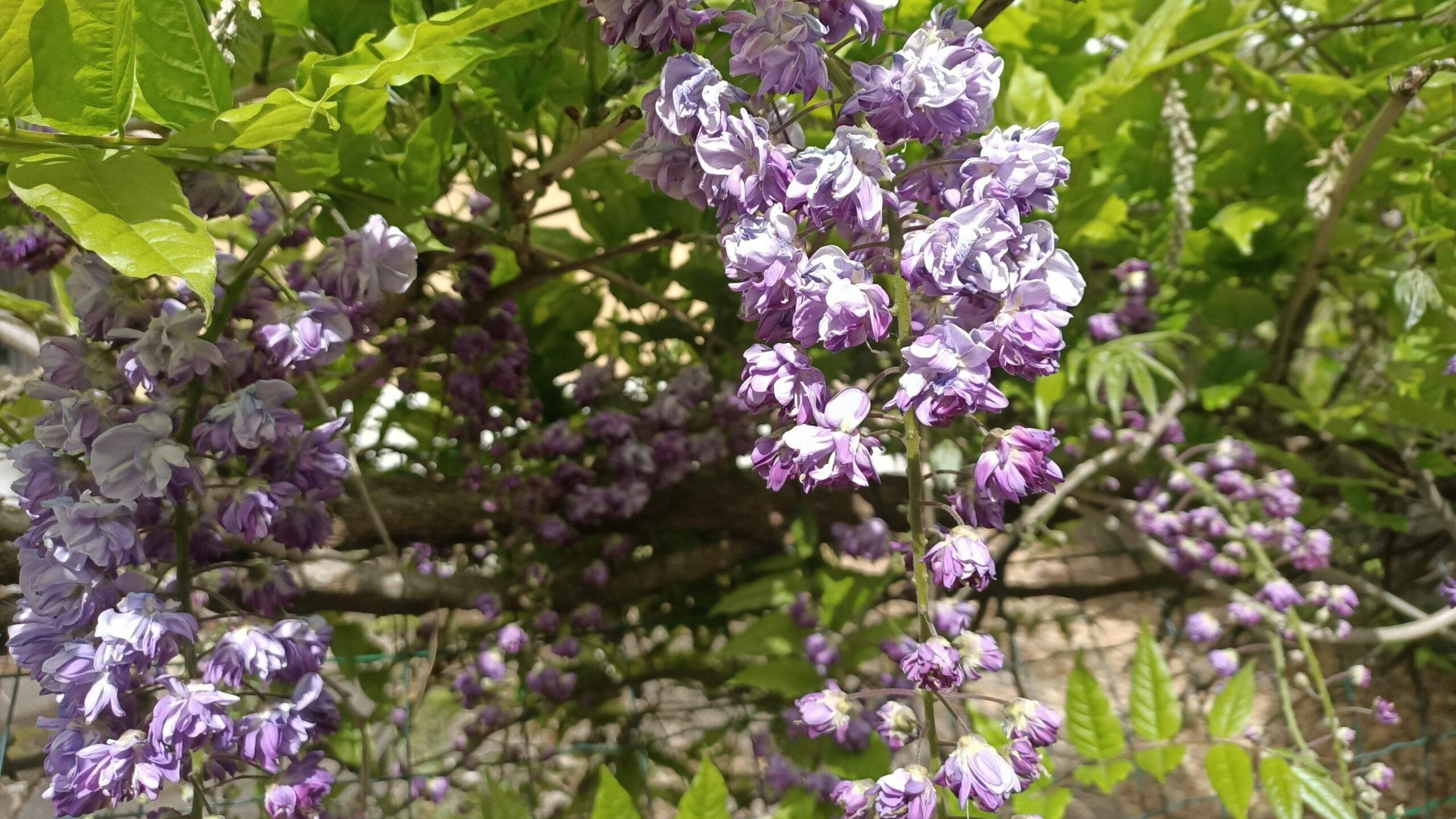 Natuur, mooie bloemen